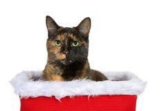Портрет кота tortoiseshell хлопающ из корзины праздника изолированной на белизне стоковые фотографии rf