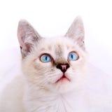 Портрет котенка Стоковые Изображения