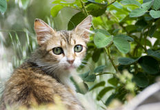 портрет котов Стоковая Фотография
