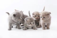 Портрет котят групп милых изолированных на белой предпосылке студии Стоковое Фото