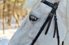 Портрет красивой белой лошади Стоковые Изображения