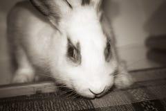 Портрет кролика Стоковые Фото