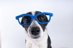 Портрет крупного плана собаки с калькулятором Стоковые Фотографии RF