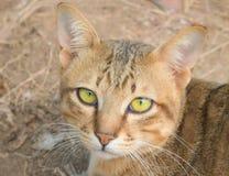 Портрет крупного плана стороны кота стоковое фото rf