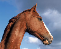 портрет лошадей Стоковые Фотографии RF
