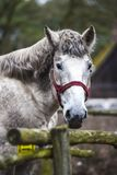 Портрет лошади в дворе Голова ` s белой лошади Стоковое фото RF