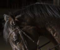Портрет лошади в конюшне лошади лошади dressage конноспортивные скача всадники поло silhouettes вектор спорта Стоковое Изображение RF