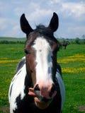 Портрет лошади в сельской местности Стоковое Фото