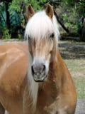 портрет лошади Стоковое фото RF