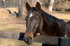 портрет лошади ii Стоковое Изображение RF