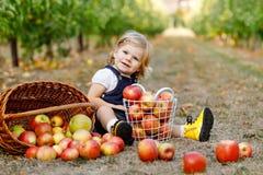 Портрет маленькой девушки малыша с красными яблоками в органическом саде Прелестный счастливый здоровый ребенок младенца выбирая  стоковые изображения