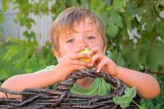 Портрет мальчика есть сочное свежее яблоко пока сидящ в корзине Принципиальная схема летних отпусков Preschooler с яблоком стоковое фото rf