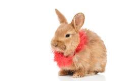 Портрет малого красивого красного кролика Стоковые Фотографии RF