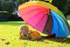 Портрет малой девушки preschooler с красочным зонтиком Стоковая Фотография