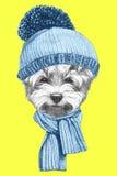 Портрет мальтийсной собаки лужицы с шляпой и шарфом Стоковая Фотография