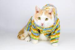 портрет милого белого и красного кота стоковое изображение rf