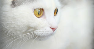 Портрет милого белого кота Стоковые Фото