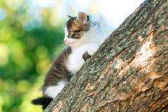 Портрет милого маленького смешного котенка взбираясь на ветви дерева в природе Стоковые Изображения