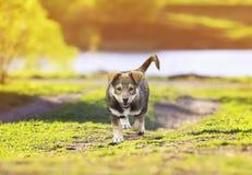 Портрет милого маленького щенка идя на тропу в gre стоковая фотография