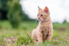 Портрет милого молодого striped кота, сидя на траве Стоковая Фотография RF
