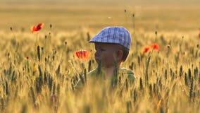 Портрет милого ребенка в хлопьях с маками field на золотом свете захода солнца видеоматериал