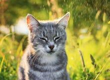 Портрет милого striped кота отдыхая на солнечном ярком ом-зелен summe Стоковые Фото