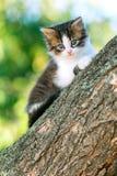 Портрет милой маленькой пушистой киски взбираясь на ветви дерева в природе Стоковое фото RF