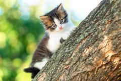 Портрет милой маленькой пушистой киски взбираясь на ветви дерева в природе Стоковые Изображения