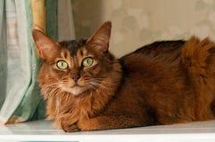 Портрет милого кота лежа Стоковое Изображение RF