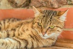 Портрет милого кота улицы tabby стоковые фото