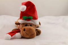 Портрет милого плюша северного оленя рождества в студии на белой предпосылке Стоковая Фотография RF