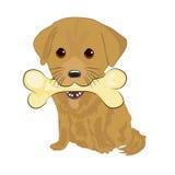 Портрет милого щенка labrador держа большую косточку с ртом Стоковые Изображения