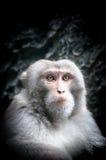 Портрет милой маленькой обезьяны с серьезной стороной. Стоковые Изображения