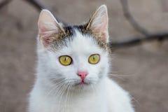 Портрет молодого белого конца-вверх кота на расплывчатом background_ стоковое изображение