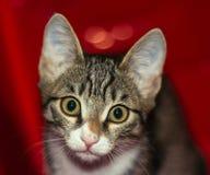 Портрет молодого и умного кота стоковое фото