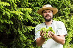 Портрет молодого человека держа ель отпочковывается в его руках Стоковое Изображение
