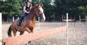 Портрет молодой женской верховой лошади жокея Стоковые Изображения