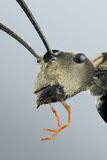 Портрет муравея Стоковые Фото