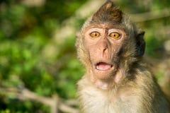 портрет обезьяны одичалый Стоковое Изображение
