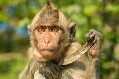 портрет обезьяны одичалый Стоковая Фотография RF