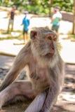 Портрет обезьяны стоковые изображения