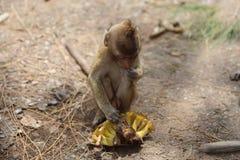 Портрет обезьяны Стоковое Фото