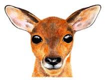 Портрет оленей козуль изображение иллюстрации летания клюва декоративное своя бумажная акварель ласточки части стоковое фото