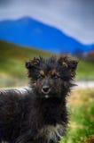 Портрет домашних животных одиночества беспризорности бездомной собаки Стоковое Изображение