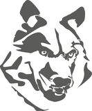 Портрет опасного волка Стоковые Изображения RF