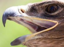 Портрет орла в парке Стоковая Фотография