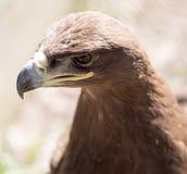 Портрет орла в парке Стоковое фото RF