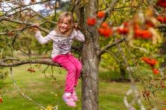 Портрет осени с ashberry Стоковые Изображения