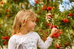 Портрет осени с ashberry Стоковые Фотографии RF