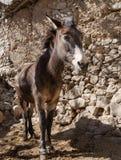 Портрет осла в морокканской деревне Стоковая Фотография